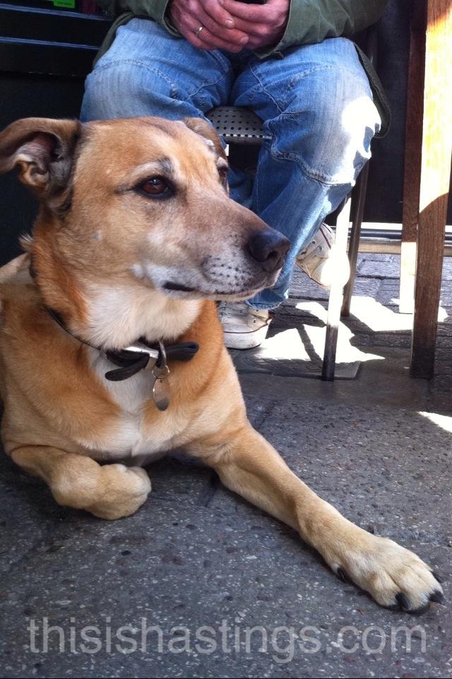 This Is Hastings - Dog Blog (Brock)